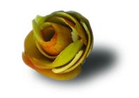 Roe bud apple peel
