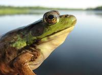 frog and lake