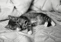 Funny kitten 3