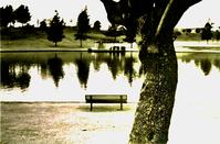 a tree, a bench