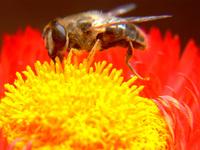 Bee 7
