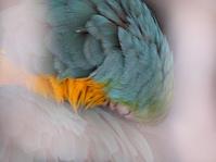 Parrot Plumage