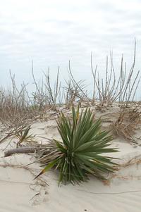 Palm Cactus