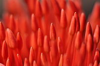 Buds flower