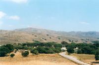 Olive trees, Crete