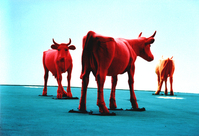 radioactive cows