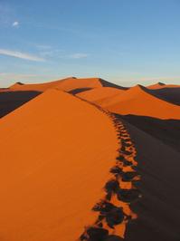 Dune ridge trail