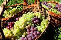 Basket of grapes 1
