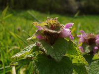 Flower_close-up