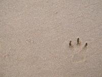 Dog step