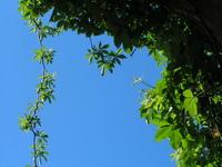 blue & green leaves