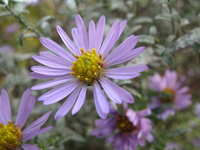 little flowers 2