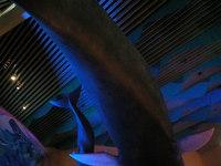 Aquarium Ceiling 5