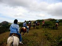 Costa Rican Horses 1