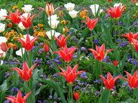 Flowerstream