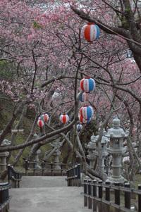 Cherry Blossom stairway