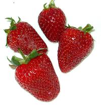 frutillas 2