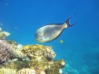 red sea underwater life 1 1