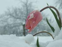 flower snow 1