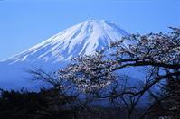Mt.Fuji SAKURA-2