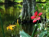 Bayou plants