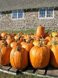 Pumpkin Farm 1