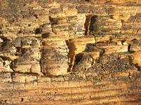 rotten wood 8