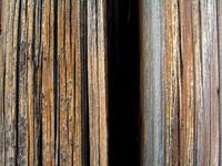 Tele-Wood