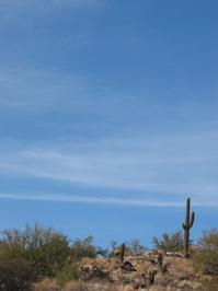 desert scenes 2