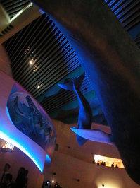 Aquarium Ceiling 4