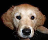 Deans Dog
