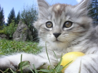 Sweet Cats 1