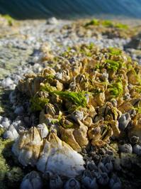 Seashells macro