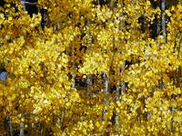 Autumn Landscape 16