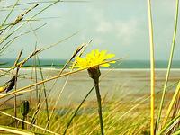 Flower near the sea
