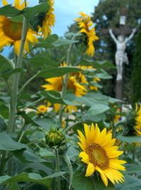 Sunflower Jesus Christ Loire V