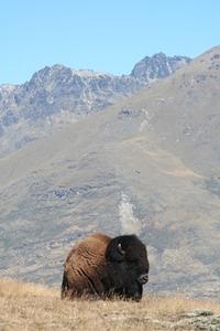 Mount Bison
