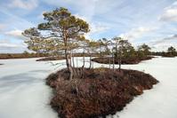 bog island