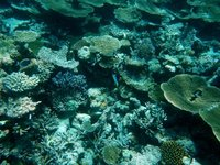 House Reef 5
