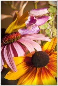 Echinacea among flowers