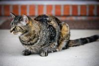 Willow Cat 1