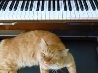 Cat 2 3