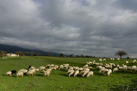 The pasture 2