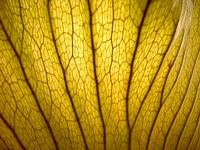 dead leaf texture