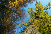 Treetops and sky