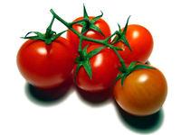 cocktail tomatos