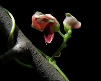 vine blossom branch