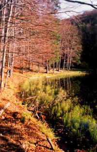 Duszatynskie Lakes