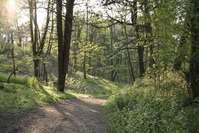 Woods, Noordwijkerhout