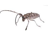 bug collection 1